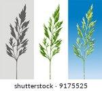 herb   Shutterstock .eps vector #9175525