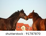 two brown horses playing with...   Shutterstock . vector #91787870