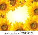 sunflower nature summer ... | Shutterstock . vector #91804829