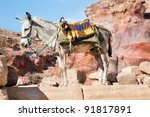 Domestic donkey in front of mountain background - stock photo