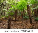 Tropical New Zealand Forest