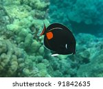 Small photo of Achilles Tang (Pa kui kui)
