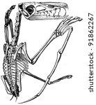 pterodactylus crassirostris  ... | Shutterstock . vector #91862267