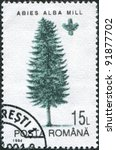 Small photo of ROMANIA - CIRCA 1994: A stamp printed in the Romania, shows the European silver fir (Abies alba mill), circa 1994