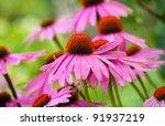 Echinacea Flowers Against Gree...