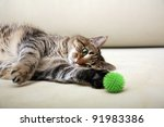 Stock photo playing cat 91983386