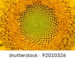 middle of sunflower close up | Shutterstock . vector #92010326