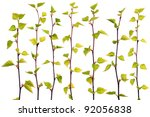 set of spring birch branches...   Shutterstock . vector #92056838