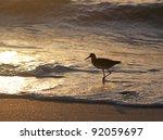 A Seagull In Silhouette Walkin...