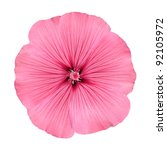 Pink Flower With Round Petals...
