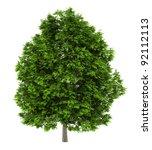 European Ash Tree Isolated On...