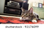 Stock photo cute kitten ready to pounce 92176099