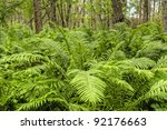 Fern Plants Cover The Ground Of ...