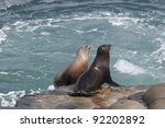 California Sea Lions On The...