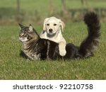 Stock photo cat and dog 92210758
