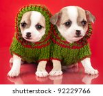 Puppy Chihuahua Dressed ...
