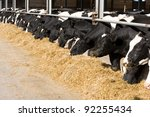 the dairy cows life in a farm.... | Shutterstock . vector #92255434