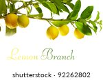Branch With Fresh Ripe Lemon...