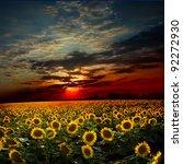 beautiful sunset over a field...   Shutterstock . vector #92272930