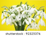 snowdrop flowers against yellow ... | Shutterstock . vector #92325376