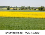 Yellow field of blooming canola in Poland - stock photo