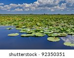 a beautiful lake in danube... | Shutterstock . vector #92350351