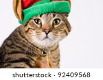 Playful tabby tiger striped cat with holiday elf hat - stock photo