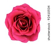 Stock photo red rose flower isolated on white background top view on beautiful red rose flower 92410534