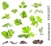 coriander  parsley  dill and... | Shutterstock . vector #92413357