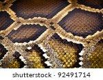 Boa Or Python Snake Pattern...