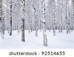 View Of Beautiful Winter Birch...