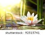 Stock photo lotus flower background 92515741