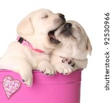 Stock photo valentine puppies in a pink container with a heart that says be mine also available in a 92530966