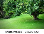 Freshly Mown Lawn and Tree in a Peaceful Leafy Garden - stock photo