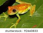 a polka dot treefrog ... | Shutterstock . vector #92660833