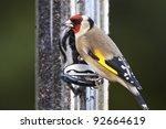 Goldfinch On Bird Feeder