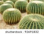 Golden Ball Cactus  ...