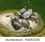 Group Of Red Eared Slider ...