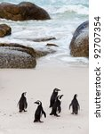 Black Footed African Penguins...