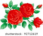 red roses. vector of red roses...