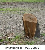 Close Up Stump Of A Freshly Cu...