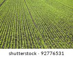 field with straight rows of... | Shutterstock . vector #92776531