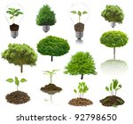 Collection Isolated Tree On Th...