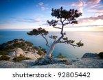 Pine Tree On A Rocky Cliff Nea...