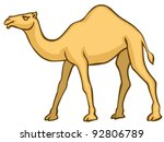 The vector Camel on white background - stock vector