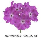 studio shot of magenta colored... | Shutterstock . vector #92822743
