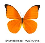 Tropical Orange Butterfly...