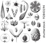 collection of seeds   vintage... | Shutterstock .eps vector #92843194