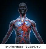 Постер, плакат: Human circulation cardiovascular system