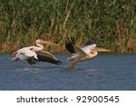 white pelicans in flight in... | Shutterstock . vector #92900545